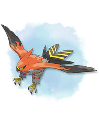 Talonflame-Pokemon-X-and-Y.jpg