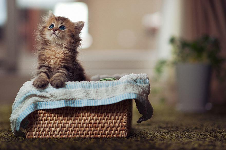 worlds-cutest-kitten-daisy-2.jpg