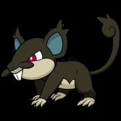 019 Rattata